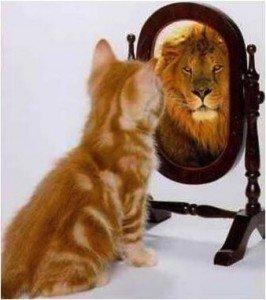 chat et lion