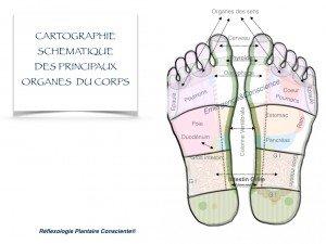 Cartographie schématique des organes du corps.001