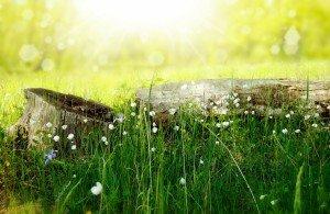 bonheur, sens, méditer, spiritualité, conscience, emergence